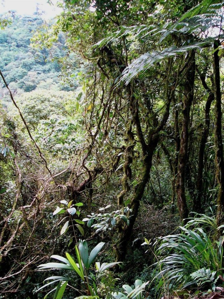 Costa Rica jungle © dan ilves