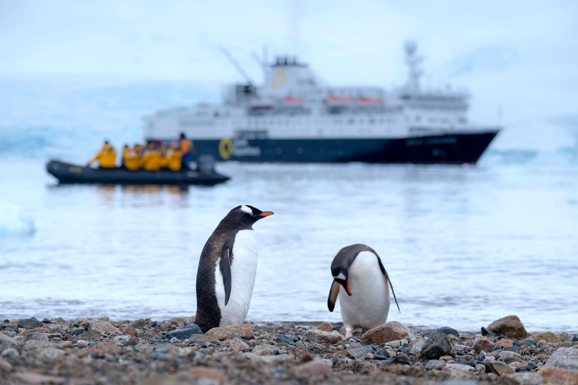 penguins with antarctica cruise