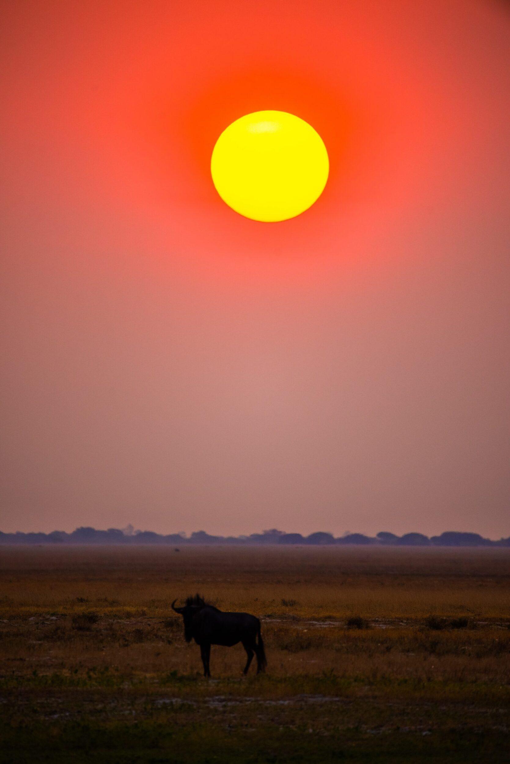 Zambian sunset, Photo by Birger Strahl on Unsplash